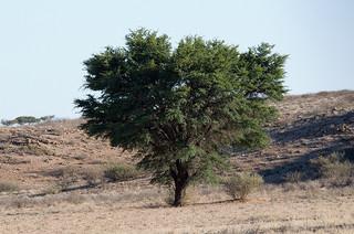 Desert_Tree.jpg