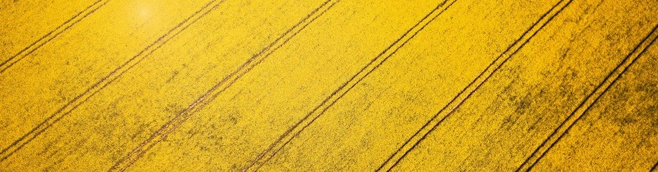 Yellow_Pattern.jpg